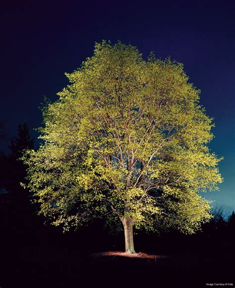 landscape lighting uplight trees outdoor lighting company uplighting mirror lighting raleigh nc