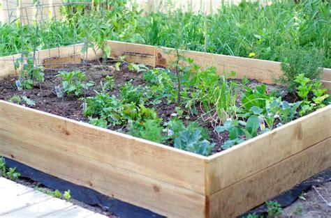 a vegetable garden box build a simple raised vegetable garden box raised garden