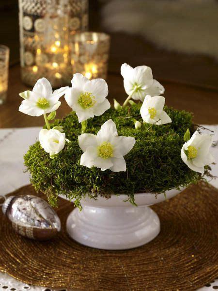 Blumen Im Frühling 5295 verzaubernd elfenzarte christrosen deko floral