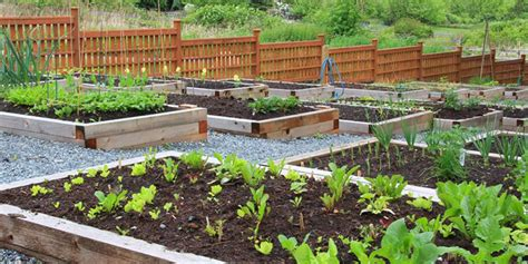 how to start a vegetable garden bed how to start a vegetable garden bunnings warehouse