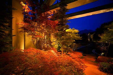 tree lighting ideas tree lighting ideas and pictures