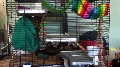 all living things luxury pet rat home