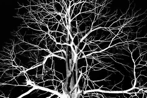 tree on black background dead tree on black background stock photo colourbox