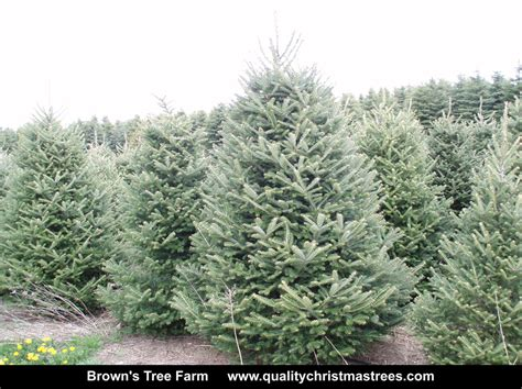 order real tree best 28 mail order tree mail order