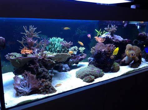 aquascaping show your skills page 30 reef central community 120 tank
