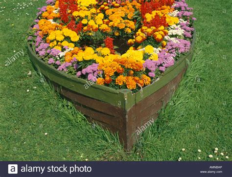 marigold flower garden marigold flowers growing in rowing boat hull in garden