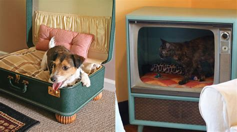 cat ideas purr fect diy cat and bed ideas bite sized biggie