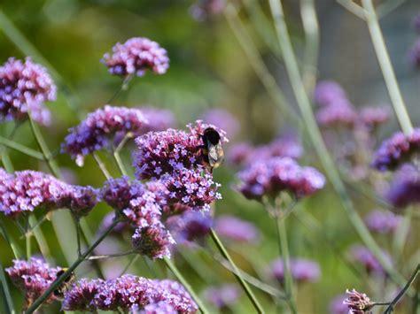 Der Bienenfreundliche Garten by Bienenfreundlicher Garten Pflanzencenter Keller