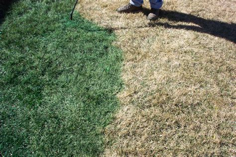 spray painting your lawn green lawnger turf lawn paint 2 5 gal green lawnger