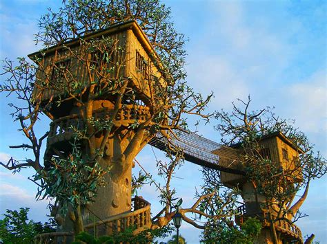 cool tree top 20 beautiful and amazing tree house wallpapers pics