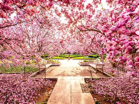 national cherry blossom festival arts and culture travelchannel travel channel