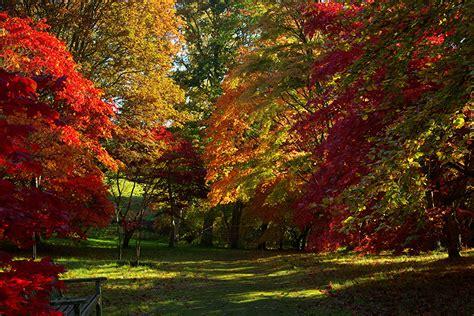 maple tree kingdom wallpaper foliage united kingdom acer nature autumn parks trees