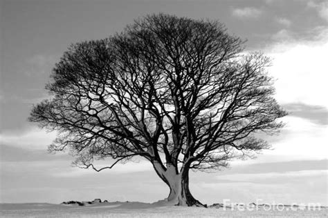 black and white tree tree black and white pictures free use image 15 01 33