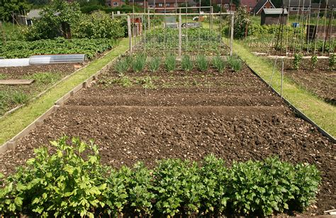 crop rotation home vegetable garden crop rotation planning harvest to table