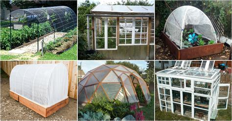 diy greenhouse quality dogs