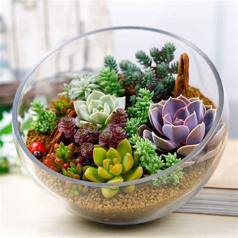 home decor stones 150pcs mixed succulent seeds lithops living stones