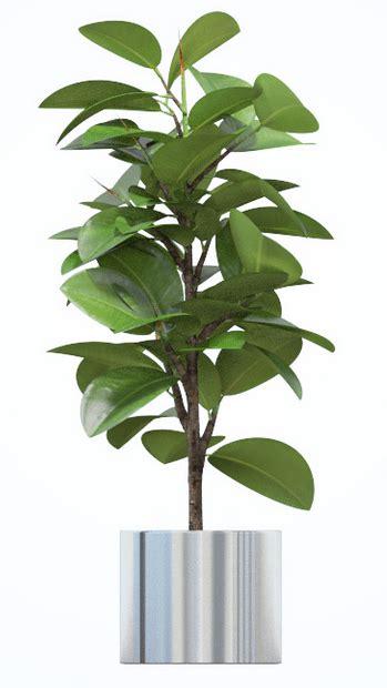 mejores plantas de interior mejores plantas de interior ii poda y jard 237 n