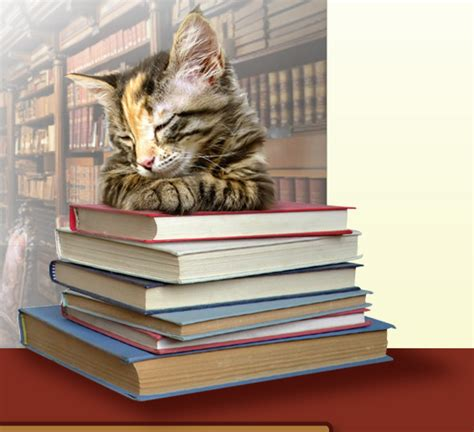 cat picture book books and cats