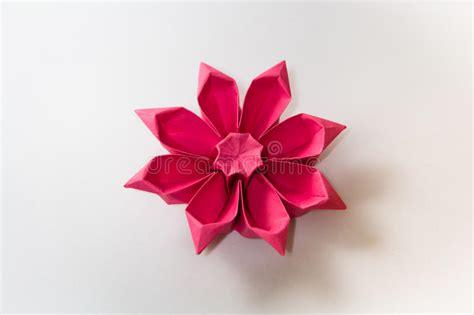 origami gerbera origami gerbera flower stock photo image 49930715