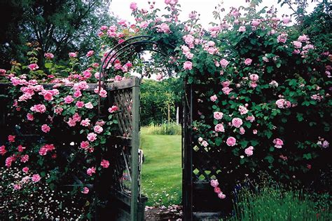 secret garden flowers beautiful secret garden flowers secret garden flower