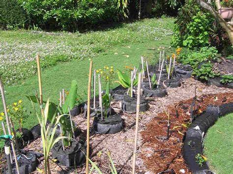 vegetable gardening in south florida in florida a turf war blooms front yard vegetable
