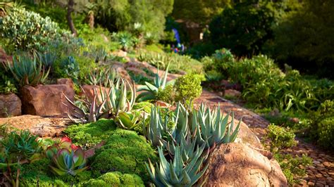 walter sisulu botanical garden walter sisulu national botanical garden in johannesburg