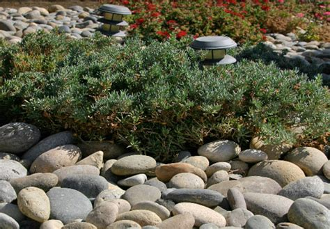 landscaping rocks and stones river rock fresno clovis ca landscaping supplies