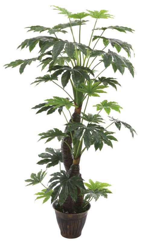 cheap artificial trees dysosma veitchii fatsia japonica