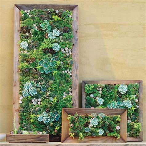 how to make a wall garden 1000 ideas about succulent frame on succulent