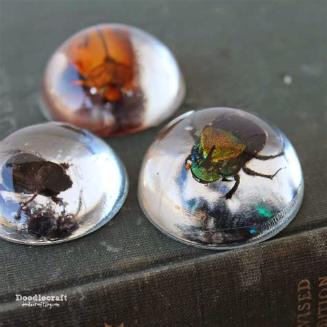 where to buy resin for jewelry doodlecraft beetles in resin jewelry