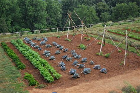 crop rotation home vegetable garden learn more about vegetable garden crop rotation