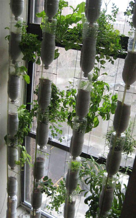 window gardens window farming a do it yourself veggie venture npr