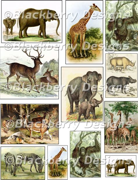 decoupage animals decoupage paper collage sheet jungle animals