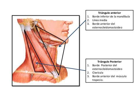 cadenas ganglionares slideshare tri 225 ngulos del cuello