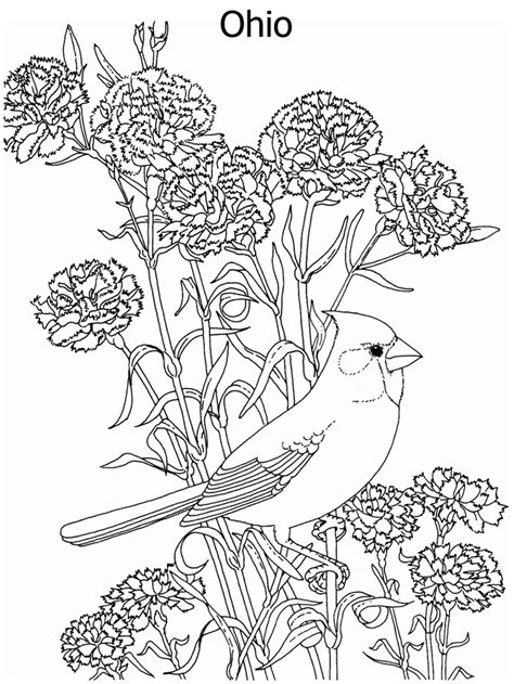 state flower and state bird coloring page
