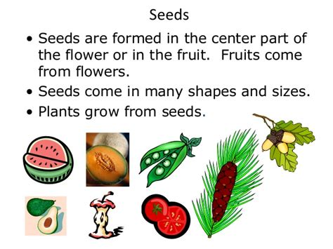 plant food that comes with flowers parts of a plant plant cycle teach