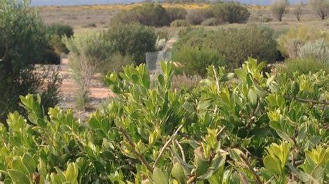 australian arid lands botanic garden australian arid lands botanic garden australian arid