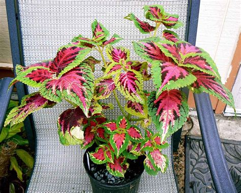 Plants Low Light 14 low light house plants for your indoors indoor plants
