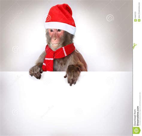 monkey santa monkey santa claus holding banner stock photo