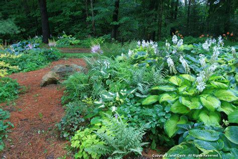 rock garden plants for shade shade gardening janet davis explores colour