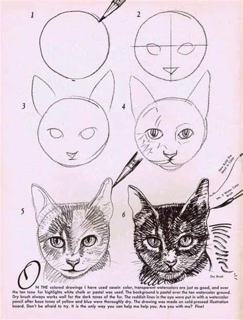 How To Draw A Cat Image 2945849 By Winterkiss On Favim