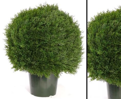 Sichtschutz Künstliche Hecke 194 zypressenkugel h 246 he 60cm durchmesser ca 50cm g 252 nstig