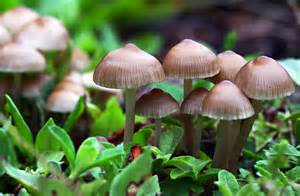 6 Ways Mushrooms Can Save The World By Paul Stamets. This