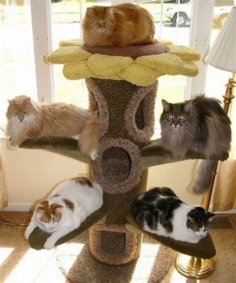 best tree for cats 10 best images about cat trees for large cats on