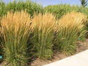Top Ornamental Grasses