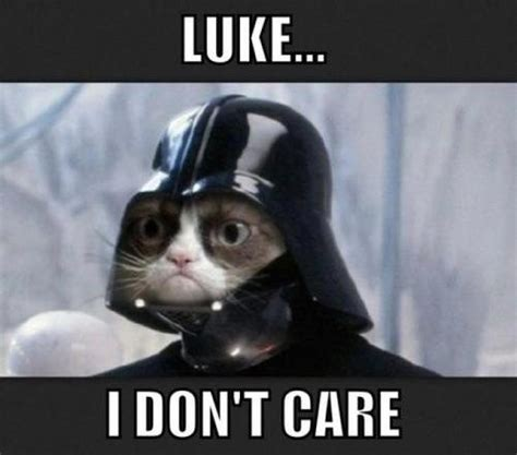 Are there cats or creatures similar to cats in the Star Wars Universe?   Science Fiction