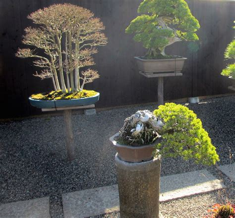fireplace store royal oak mi bonsai garden in japan 28 images japan international