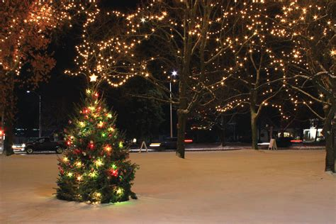tree store riverhead ny tree shop riverhead excellent places to choose