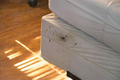 what is a bed 17 insanely actionable tips that can prevent a bed bug