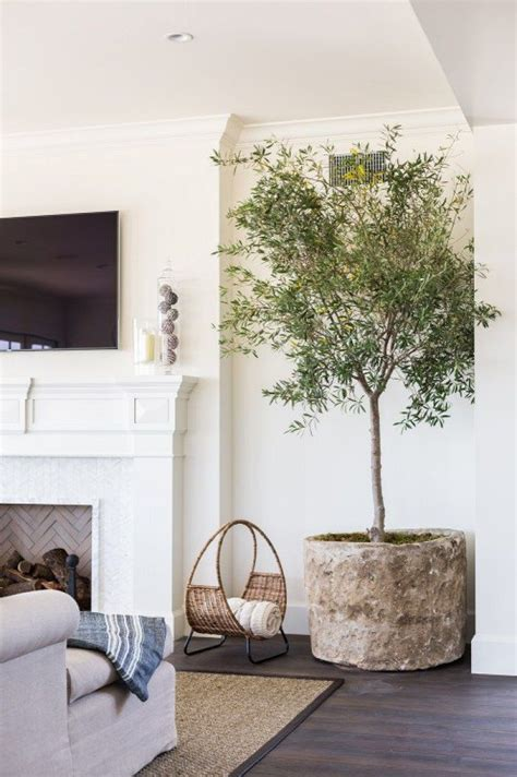 decoraci n interior de casas macetas para interiores plantas de interior en decoraci n